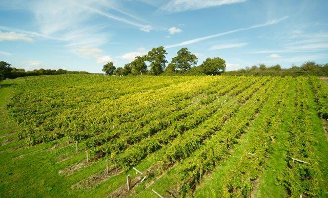 Sherborne Wine 2