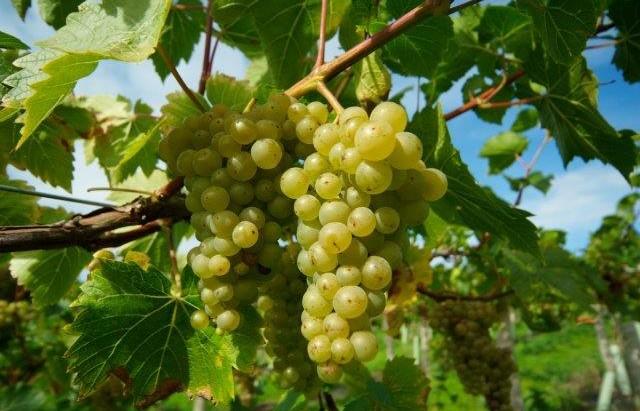 Sherborne Wine 3