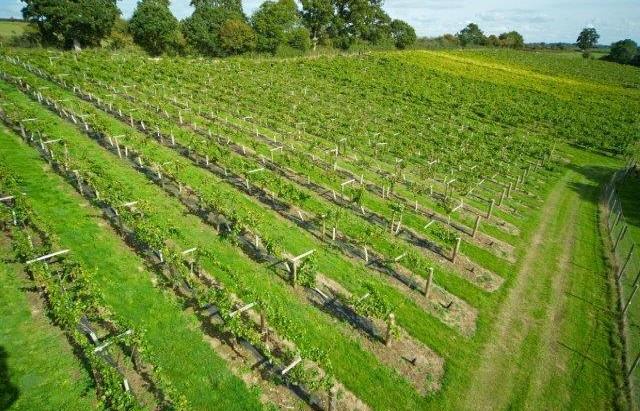Sherborne Wine 4