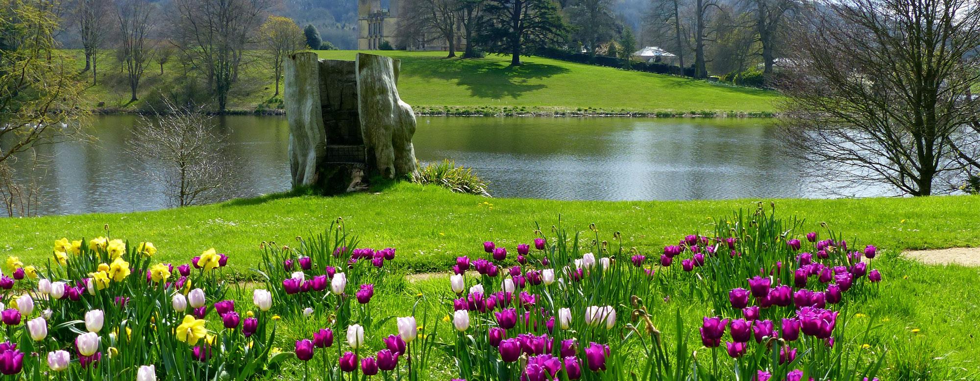 slide_tulips